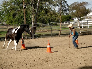 Summer Wind Ranch Horse Training